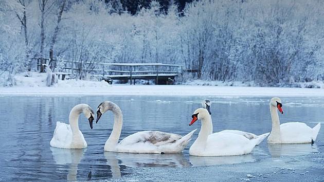 Hladnoća ugrozila ptice, Dunav zaleđen