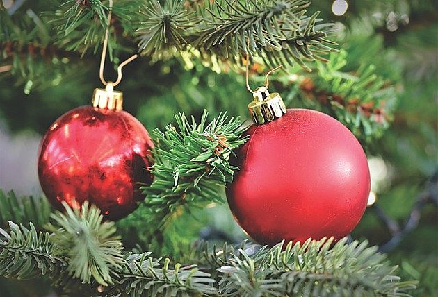 Novogodišnje jelke sa busenom mogu rasti po Novom Sadu ili na planini Cer
