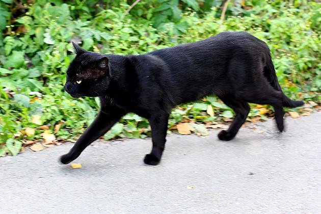 Za ujed mačke traže 250.000 dinara