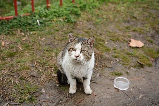 Inicijativa da se dozvoli hranjenje i postavljanje kućica za ulične pse i mačke