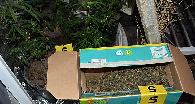 Laboratorija za uzgoj marihuane u kući Novosađanina
