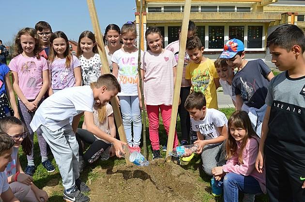 Učenici u školskom dvorištu posadili 30 stabala drveća