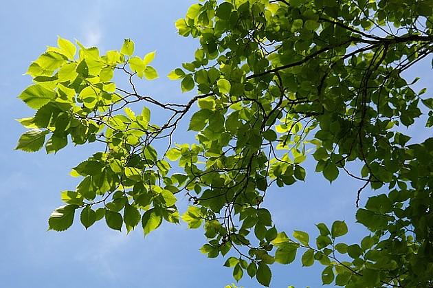 Novosađani žele da sačuvaju svoju zelenu oazu