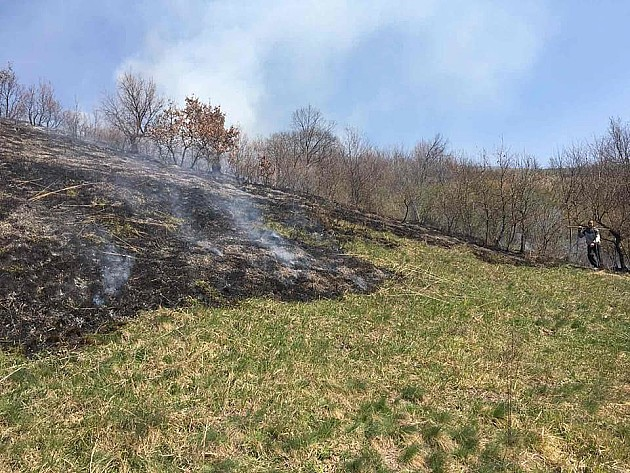 Roštiljali na Fruškoj gori i izazvali požar, izgorelo 10 hektara livade