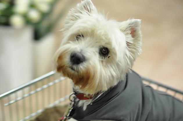 Lopov strgao lančić prolaznici i pri bekstvu ubio vlasničkog psa