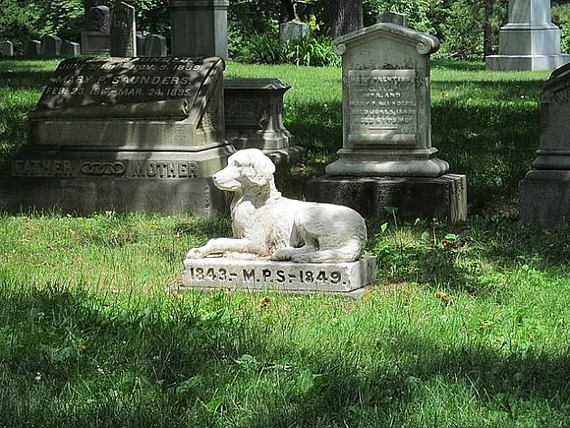 Deset hektara za groblje kućnih ljubimaca