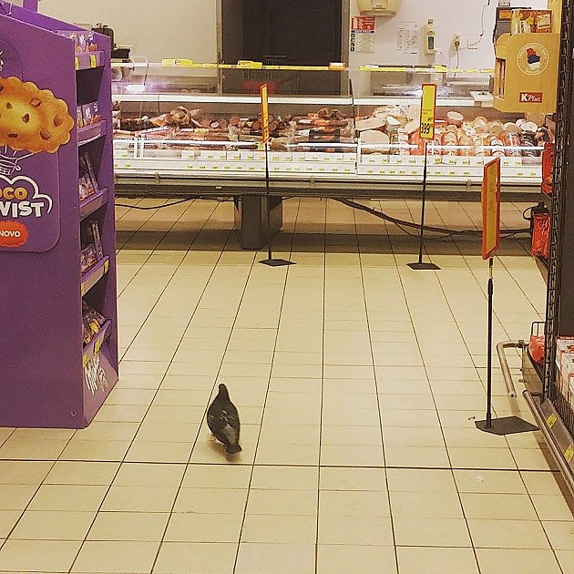 Golubovi kljucaju u supermarketu