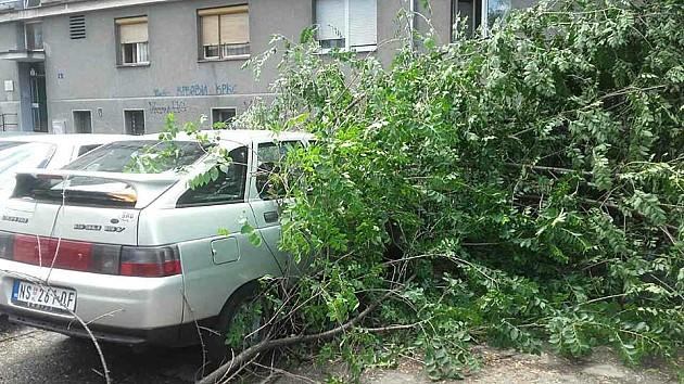 Drvo palo na automobil u pokretu, žena poginula