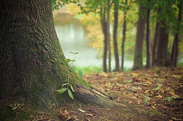 Peticiju za zabranu seče šuma Fruške gore potpisalo više od sedam hiljada građana