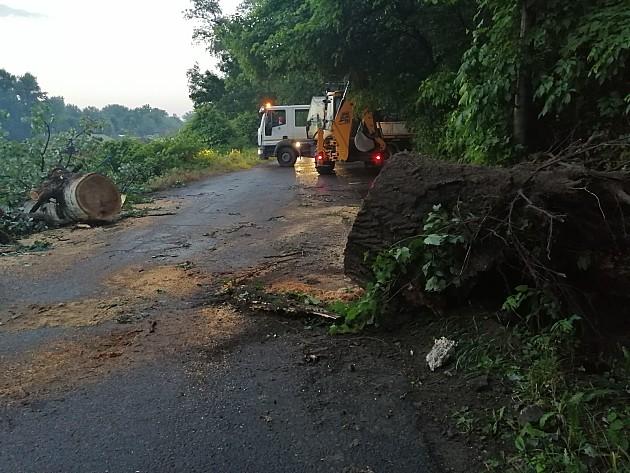 Zelenilo uklonilo stabla koja su se srušila tokom nevremena