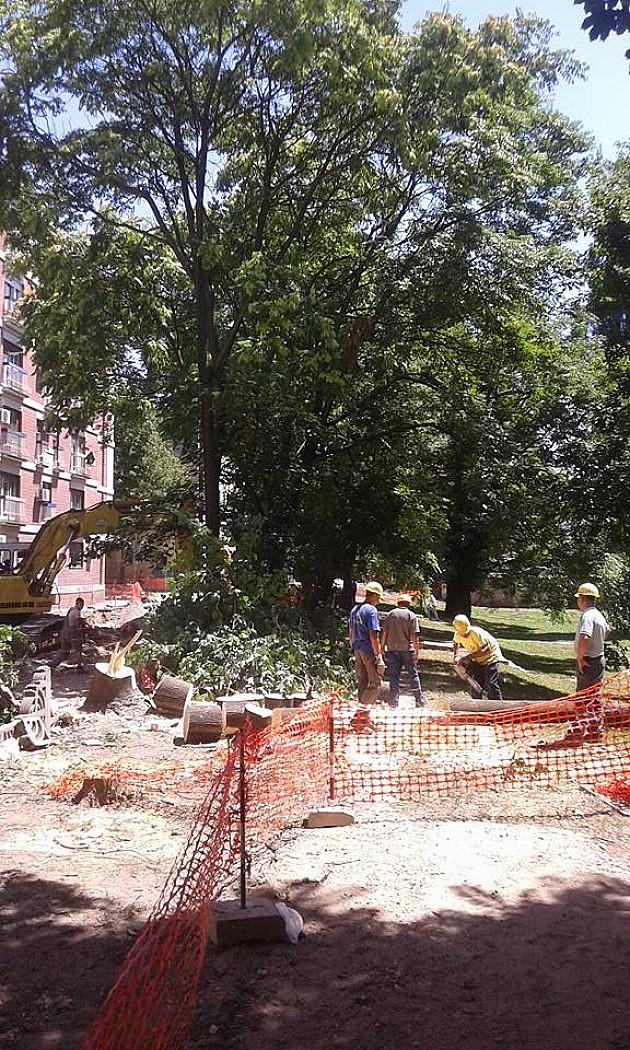 Peticijom protiv uništavanja zelene površine kod Muzeja Vojvodine