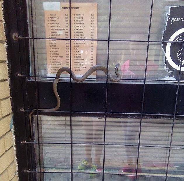 Devojčice uslikale zmiju na Novom naselju