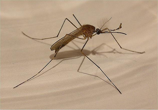Prskanje komaraca u Novom Sadu od 31. jula