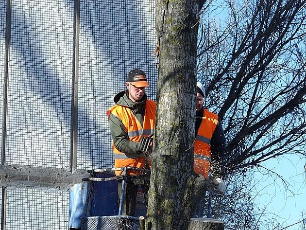 Zelenilo orezivalo granje na Grbavici, građani negodovali