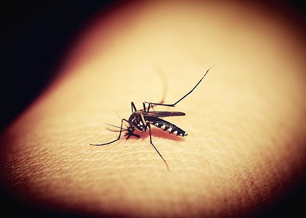 U četvrtak počinje prskanje komaraca sa zemlje i iz vazduha