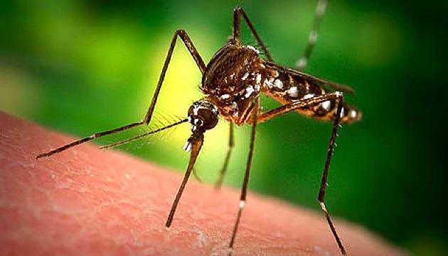 Prskanje komaraca naredne dve sedmice