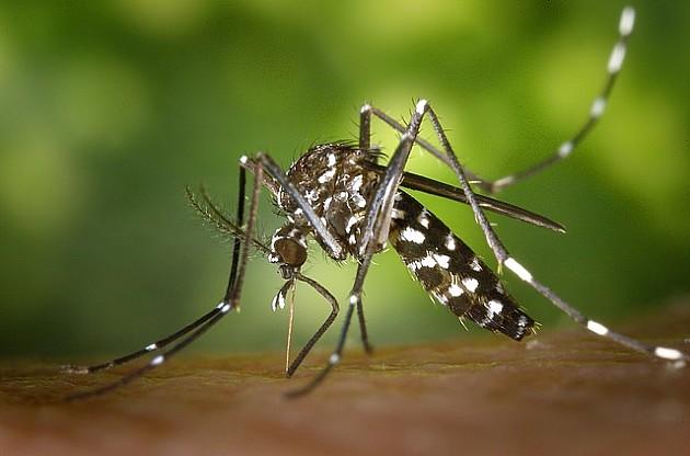 Legla tigrastog komarca pronađena u gumama na auto-placu