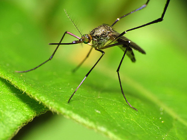 Tretmani protiv komaraca od ponedeljka