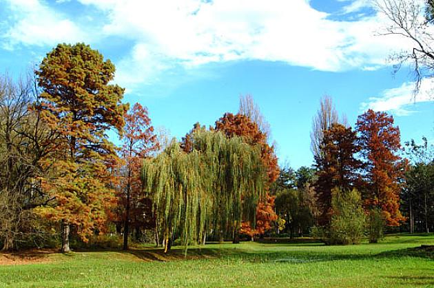 Dve trećine grada pod zelenilom – travnatih površina 30%, drveće 23%, žbunje 14%