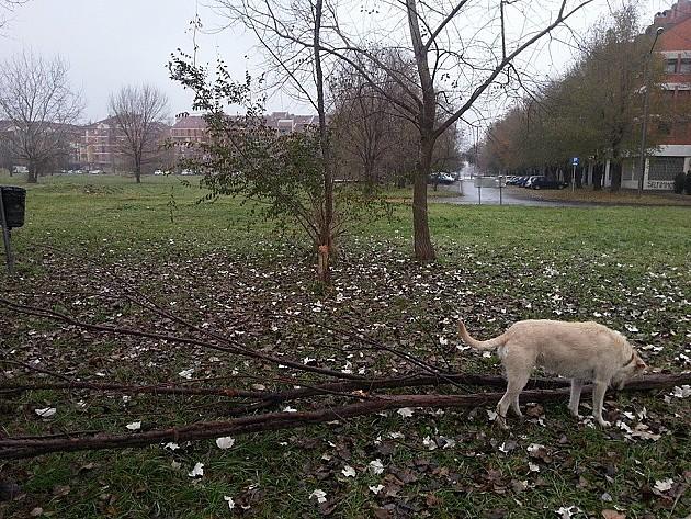 Liman, Naselje i Blok dobijaju ograđene površine za istrčavanje pasa