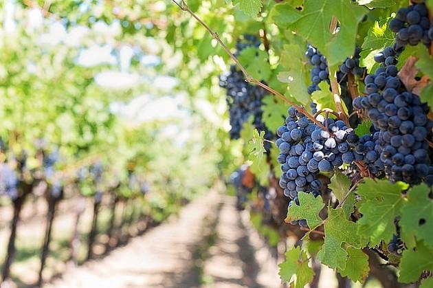 U Sremskim Karlovcima gradiće se nacionalni institut za vinogradarstvo i vinarstvo