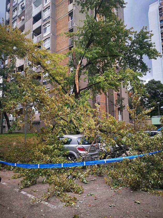 Velika grana pala na automobile na Podbari