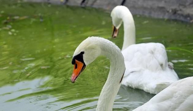 Dunavski park će biti ograđen do proleća