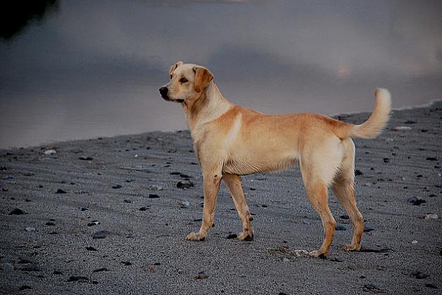 Izložba pasa mešanaca u nedelju na Štrandu
