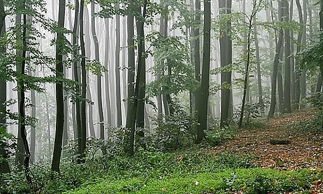 Spasioci pronašli telo nestalog muškarca na Fruškoj gori