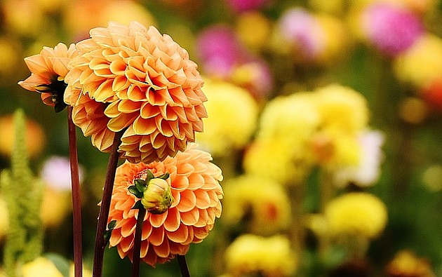 Novosadska cvetna pijaca u jesenjem ciklusu