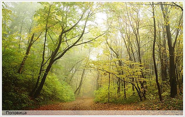 Sadnjom 60.000 sadnica obeležava se 60 godina Nacionalnog parka Fruška gora