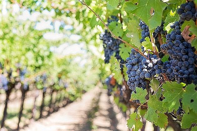 Vinogradi Navipa kod Novog Sada ponovo ponuđeni na prodaju