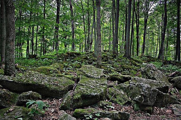 Praznično planinarenje Fruškom gorom