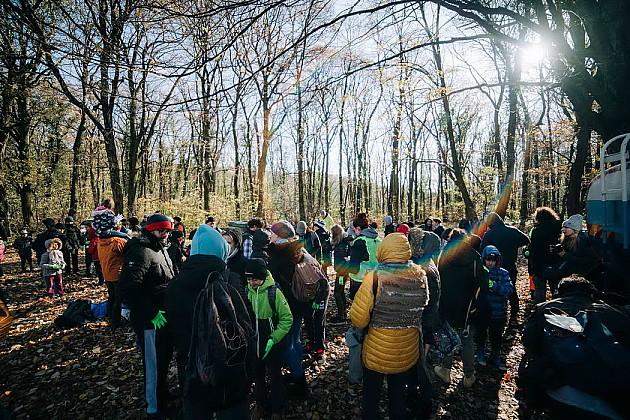 Zasađeno 13.000 stabala hrasta na Fruškoj gori