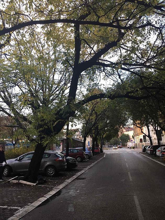 Uklonjeno stablo ispred suda zbog bezbednosti