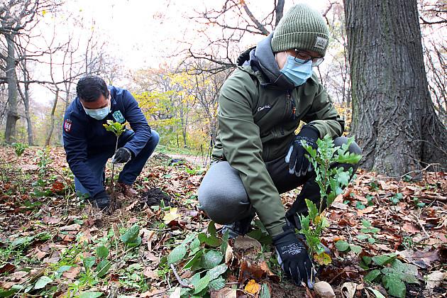 Sadnja 60.000 sadnica za 60 godina NP Fruška gora