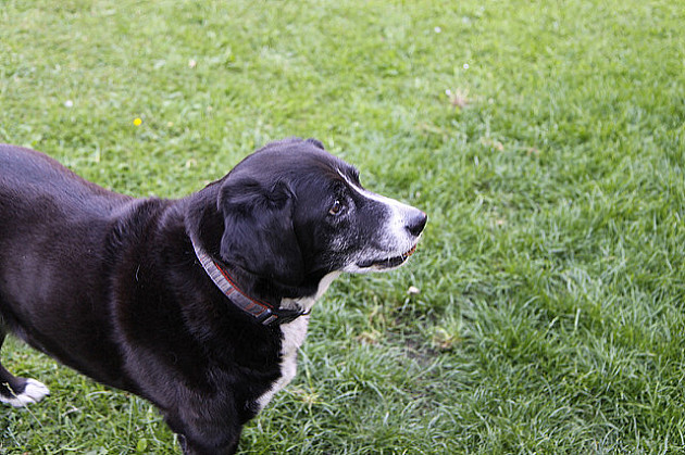 Još tri ograđena parka za istrčavanje pasa