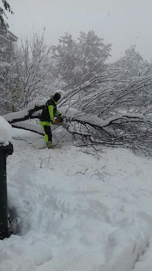 Lomi se granje pod teretom snega, palo i stablo