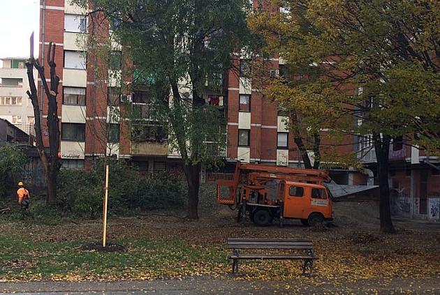 Orezana stara stabla, a posađeni grab, jasen, lipa, ukrasna trešnja