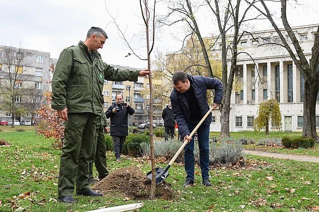 Zelena nedelja počela sadnjom lipe kod Skupštine Vojvodine
