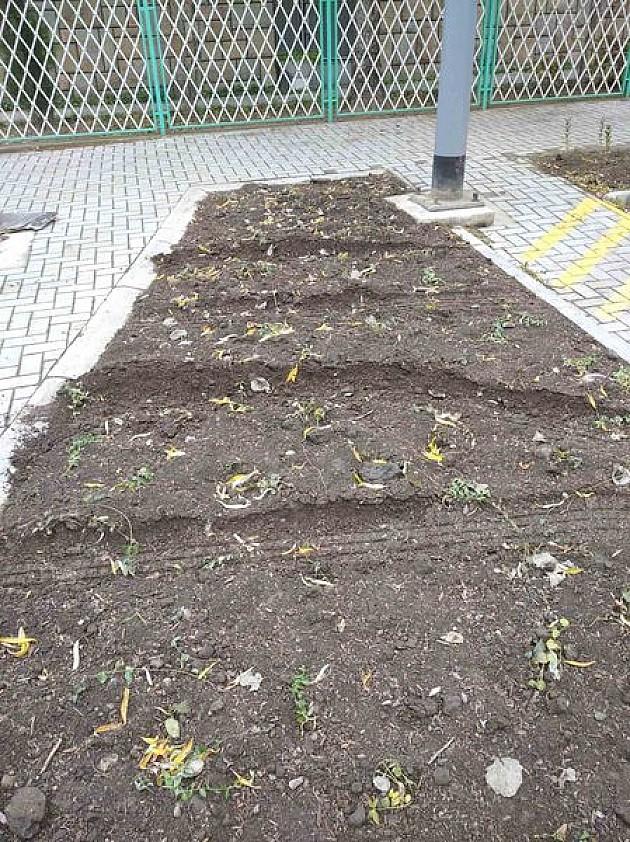 Uništene tek posađene sadnice u Ruđera Boškovića